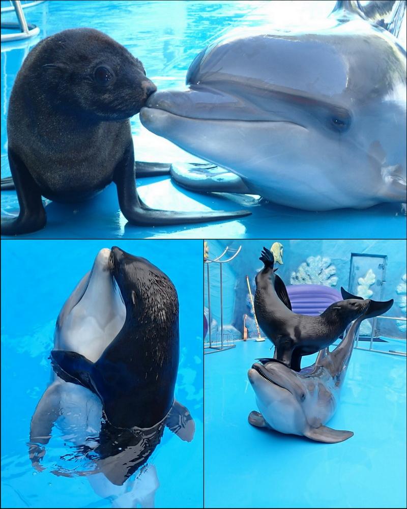Секс морских дельфинов