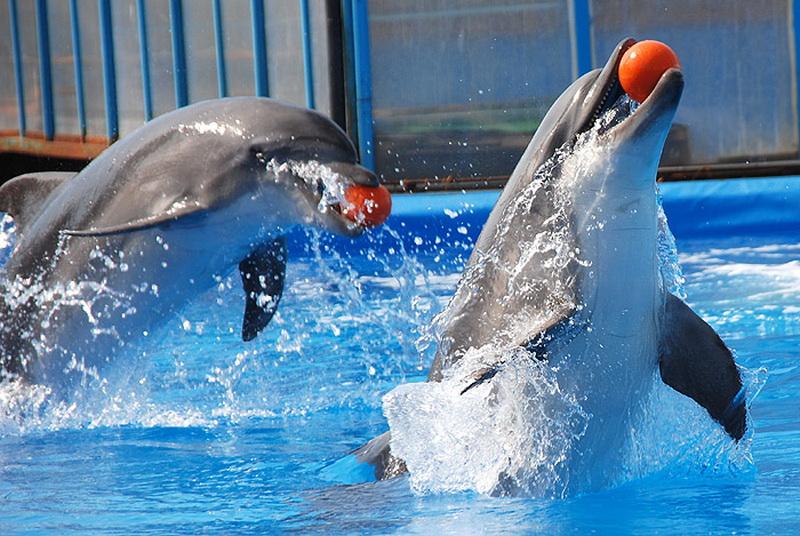 Достопримечательности Крыма: Топ-5 дельфинариев полуострова фото 1