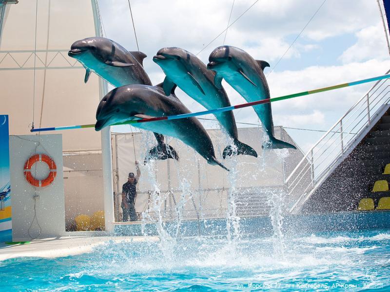 Достопримечательности Крыма: Топ-5 дельфинариев полуострова фото 3