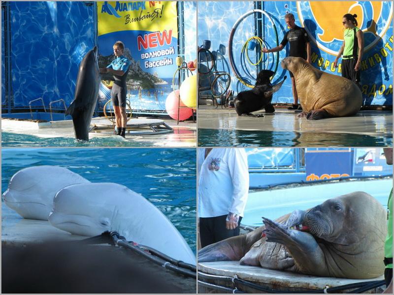 Достопримечательности Крыма: Топ-5 дельфинариев полуострова фото