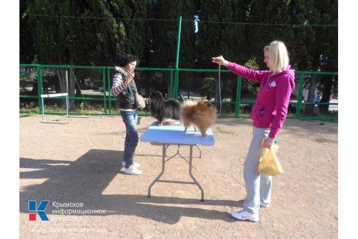 В Алуште провели выставку собак