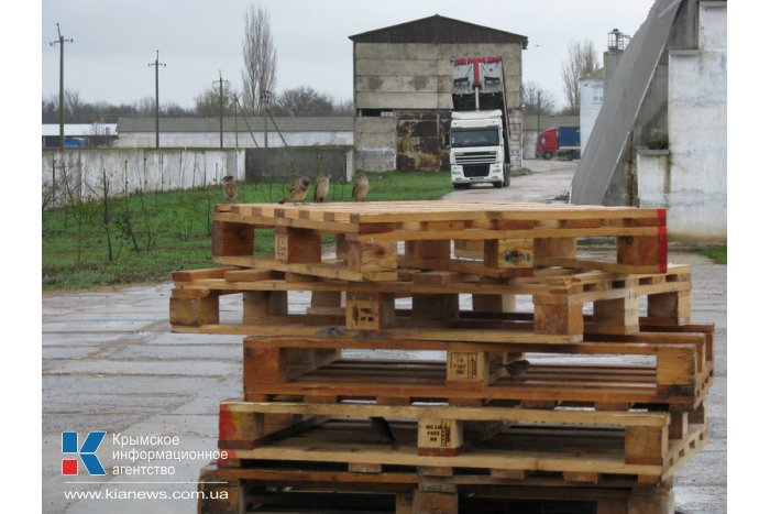 Инвесторов призвали обратить внимание на Северный Крым