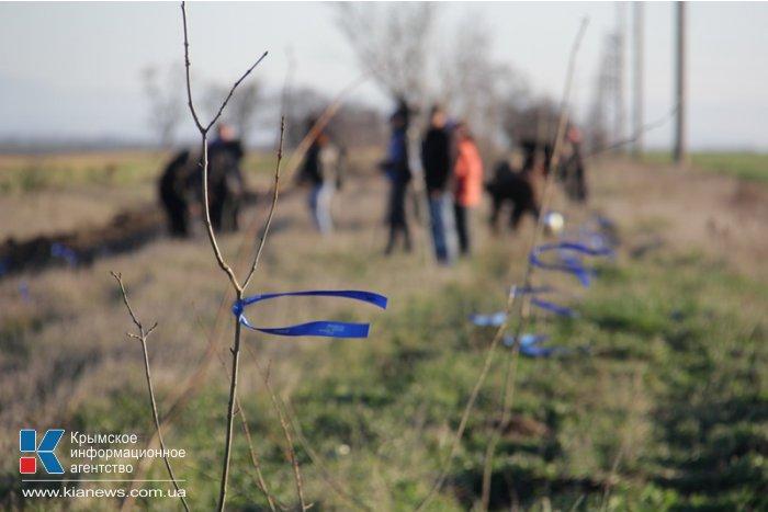 Вдоль трассы в Симферопольском районе высадили деревья