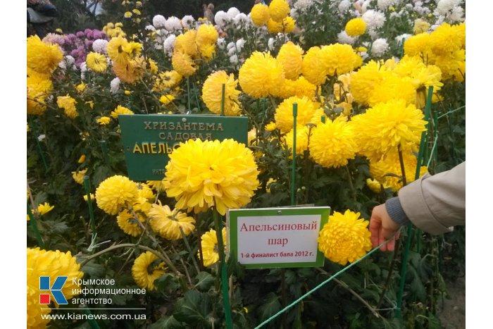 В Никитском ботаническом саду завершился «Бал хризантем»