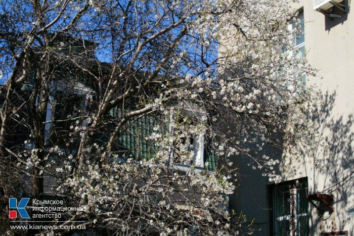 В Симферополе начали цвести деревья