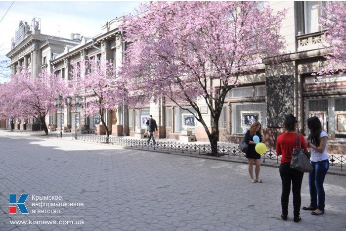 В центре Симферополя зацвела слива