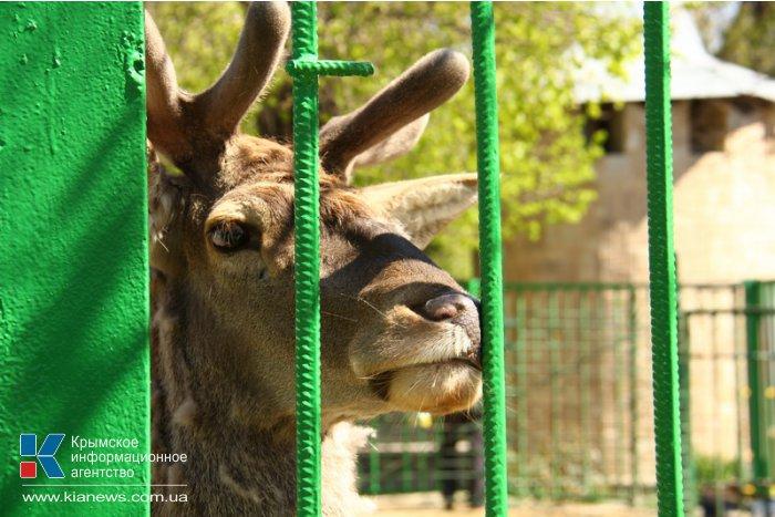 Симферопольский зооуголок пополнится новыми животными из России