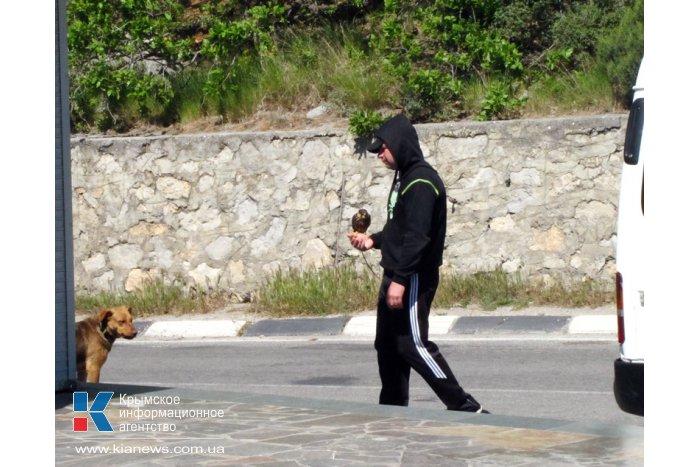 В Крыму активизировались фотографы-живодеры