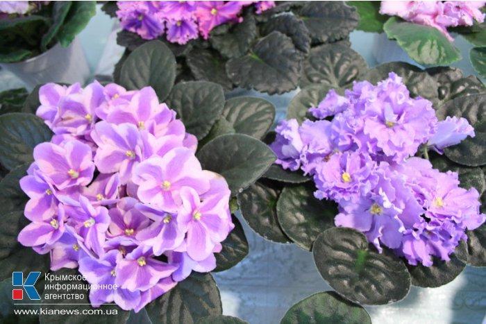В Симферополе представили 150 сортов фиалок и кактусов