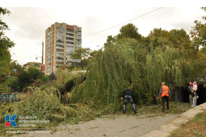 В центре Симферополе стихия повалила около 15 деревьев