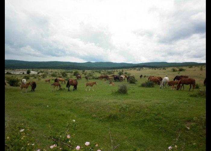 В Белогорском районе хотят построить центр по лечению кумысом