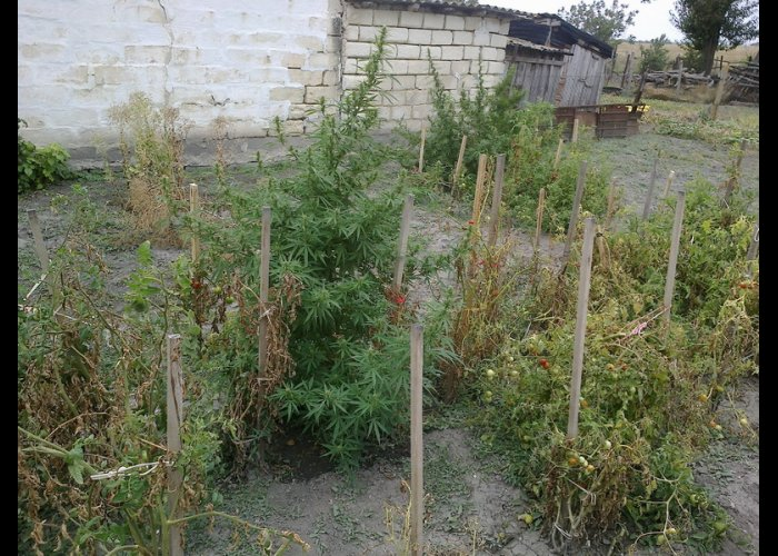 В Кировском районе выявили пять фактов хранения наркотиков
