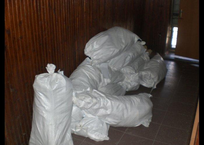 Житель Кировского района вырастил двухметровую коноплю