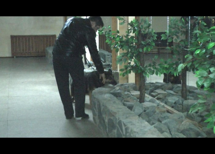 «Минером» школы в Симферополе оказался второклассник