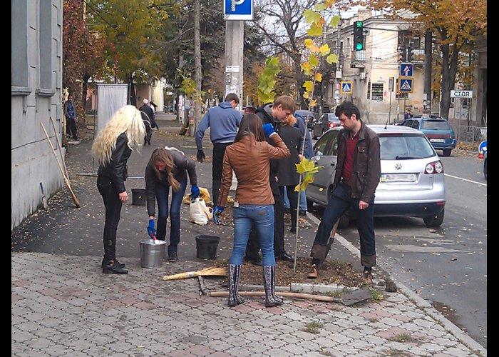 В центре Симферополя высадили саженцы платана