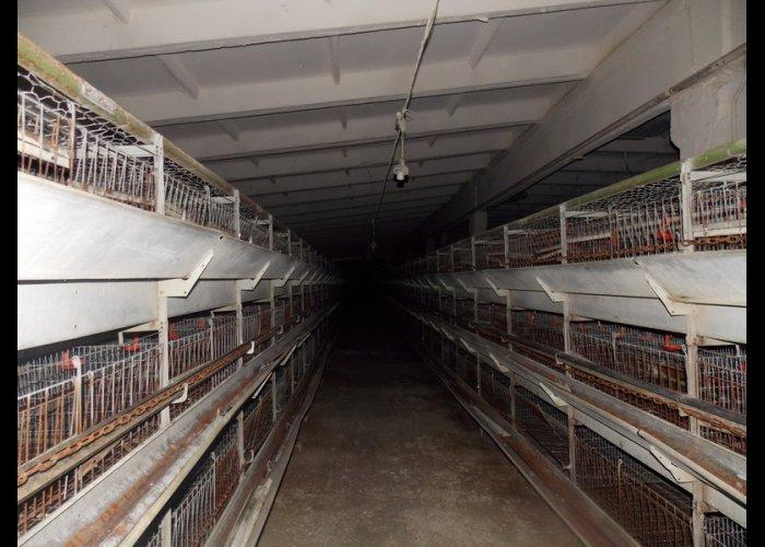 В Крыму восстанавливают птицефабрику «Южная»