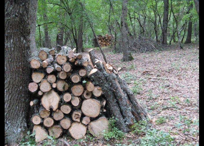 В Крымском заповеднике незаконно ведется хоздеятельность, – экологи