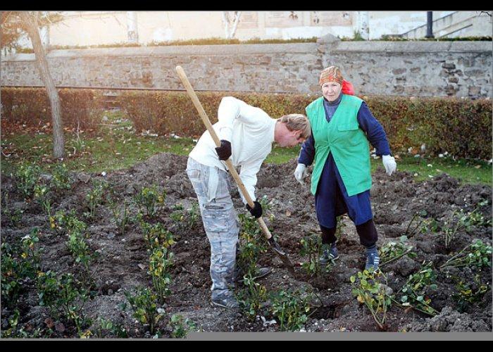 На набережной Феодосии посадят 2543 кустов роз