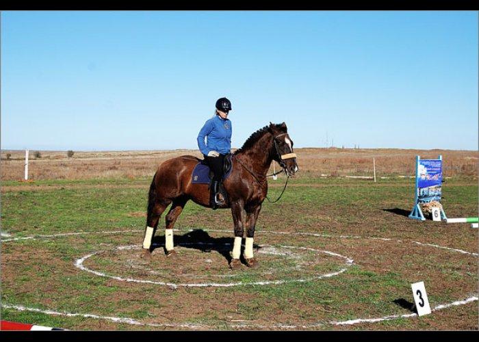 В Феодосии будут развивать конный спорт