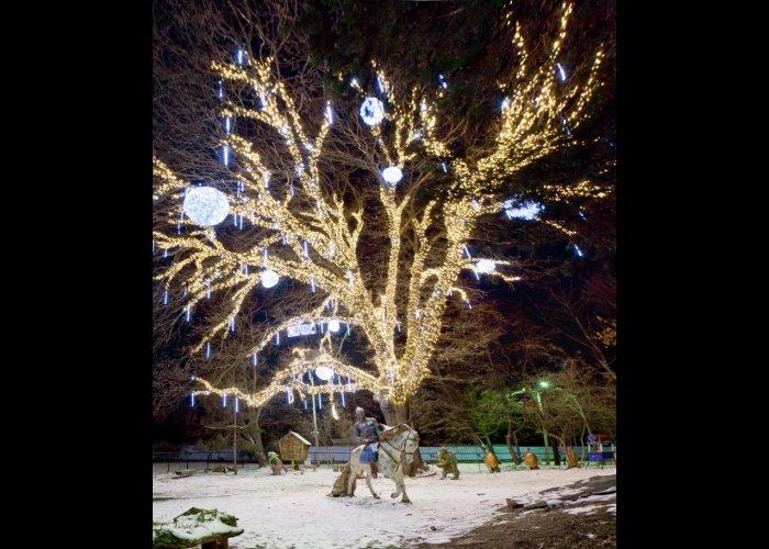 «ДТЭК Крымэнерго» устроило иллюминацию в парке Симферополя