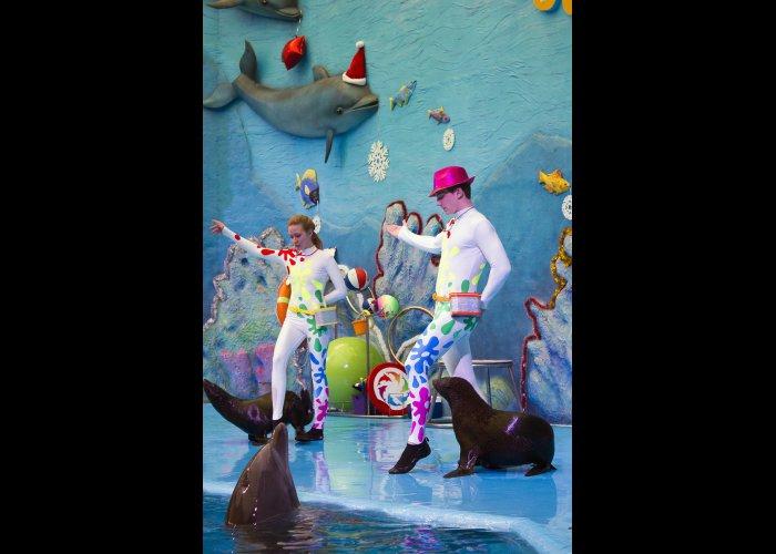 В Алуште поставили спектакль-мюзикл в дельфинарии