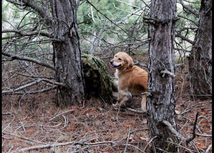 В Севастополе провели аттестацию собак-спасателей