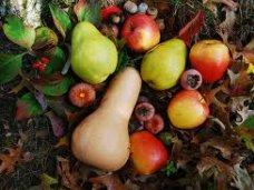 В Бахчисарайском районе построили современный холодильник на 2,1 тыс. тонн фруктов