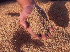 В Крыму разработают инвестпроекты для привлечения инвесторов в сельское хозяйство