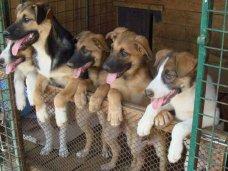 В Лучистом появится приют для бездомных животных