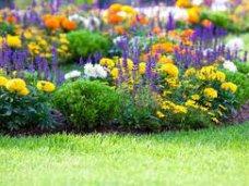 Благоустройство, С начала года в Ялте высадили более 42 тыс. цветов