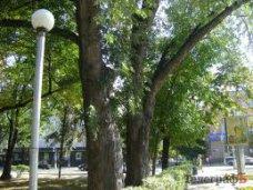 Мэр Ялты пообещал сохранить деревья в скверах города