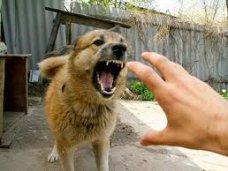 За неделю в Алуште бродячие собаки покусали 7 человек