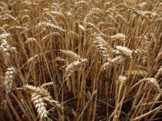 В октябре в Бахчисарайском районе пройдет праздник урожая