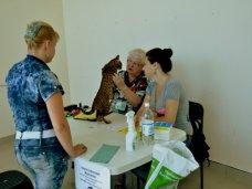 В Севастополе более 100 кошек участвовали в международной выставке