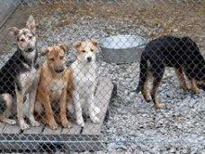 В Большой Феодосии построят питомник для бездомных животных