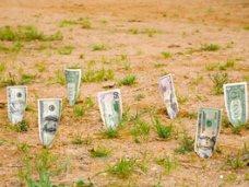 Налоги, В Крыму поступления платы за землю выросли на 20%