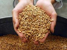 В Крыму достаточно зерна, чтобы не повышать цены на хлеб