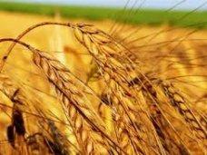 Депутат Крыма предложил создать зерновой аналог ОПЕК