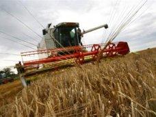 В Кировском районе убирают поздние культуры и сеют озимые зерновые
