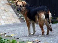 Евпаторийцев научат стерилизации бездомных животных
