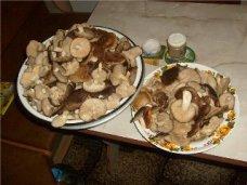 отравление грибами, В Крыму снизилась смертность от отравления грибами