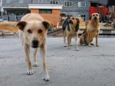 Милицию просят разобраться, кто отравил джанкойских собак