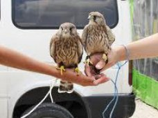 В Крыму предлагают ввести мораторий на фотоуслуги с животными