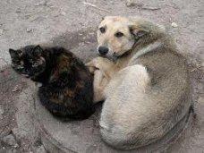 В Крыму будут регулировать численность бездомных животных