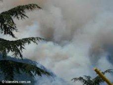 В этом году Ялтинский заповедник горел 29 раз