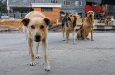 В Алуште местный житель травит собак
