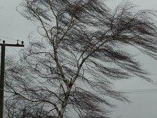 Сильный ветер оставил без света более 17 тыс. крымчан