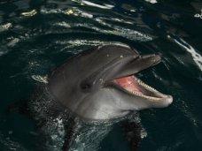 Дельфинарий, В Ялте открыли центр дельфинотерапии