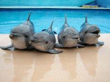 Дельфинарий, В этом году в Алуште откроют два дельфинария