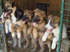 Инвесторам предложили построить в Евпатории приют для бездомных животных